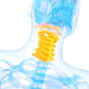 Halswirbelsäule